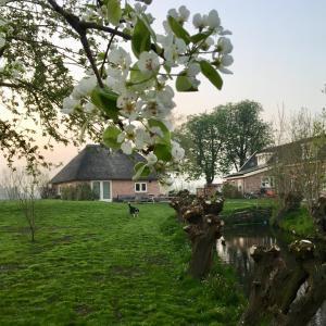 Een tuin van Groeten uit Hoogmade - rural cottage