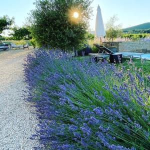 Zahrada ubytování Maison d'hôtes Bastide St Victor