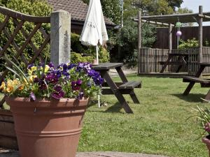 A garden outside Marsham Arms Inn