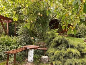 Градина пред Вила Пролет