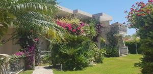 A garden outside Palm Village