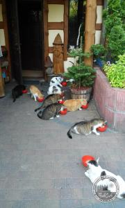 Pet or pets staying with guests at BAJA Gospodarstwo Agroturystyczne