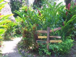 A garden outside El Hotelito Perdido