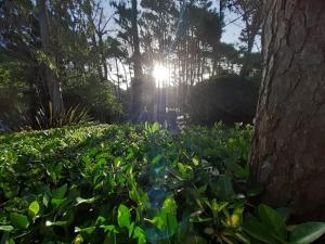 A garden outside Miradores del Bosque Apart & Spa