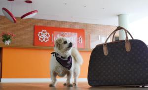Pet ou pets ficando com hóspedes em Hotel Manacá
