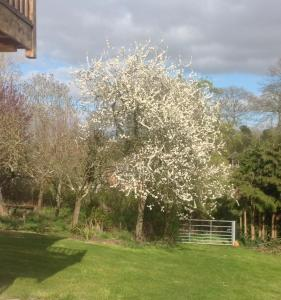 A garden outside Shakespeare's View
