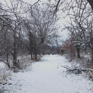 Shakespeare's View during the winter