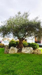 A garden outside Arraigos