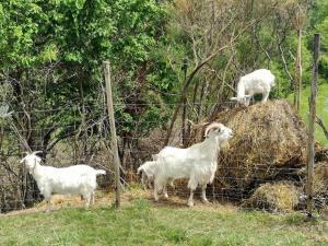 Ospiti di Agriturismo La Castellana con animali domestici