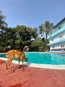 The swimming pool at or near Hotel Restaurant océano