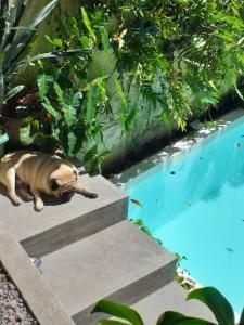 A piscina localizada em Hospedaria Santa Bárbara ou nos arredores