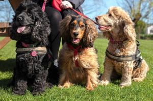 Pet or pets staying with guests at The Ferry Boat Inn
