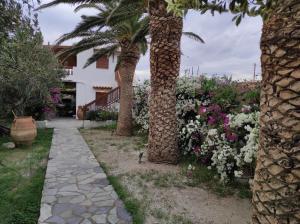 A garden outside Melia's House