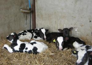 Pet or pets staying with guests at Alltyfyrddin Farm
