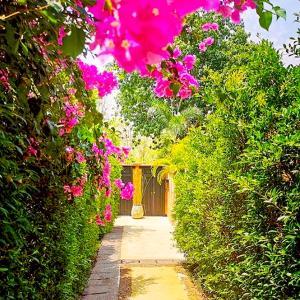 A garden outside Alanta Villa - SHA Plus