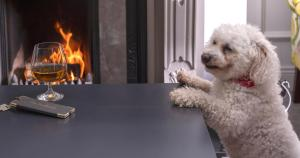 Pet or pets staying with guests at Brook Lodge Boutique Hotel