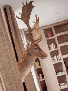 Animales en el hotel o alrededores