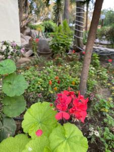 Um jardim em Sadeem Village & Chalet