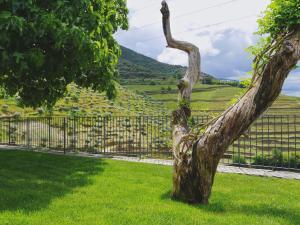A garden outside Quinta do Tedo