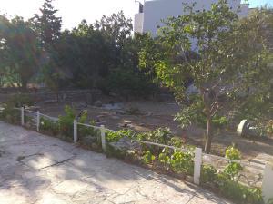 Сад в Alex Studios Tinos