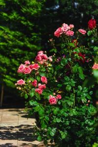 Сад в Hotel Soprano