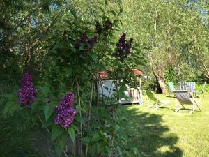 Ein Garten an der Unterkunft Küstenpferde Boltenhagen