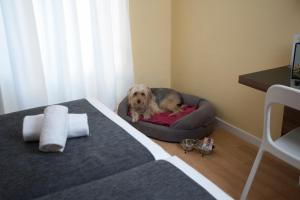 Pet or pets staying with guests at Casual del Cine Valencia