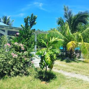 A garden outside Le fare bleu Tiputa Rangiroa