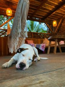 Pet or pets staying with guests at Hostel Casa Azul