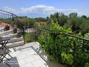 A balcony or terrace at Anastasios Olive Garden Apartments