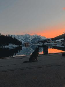 Mascotas con sus dueños en Quinz - Locanda Al Lago