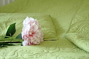 Łóżko lub łóżka w pokoju w obiekcie Willa Majka - Bukowina Tatrzańska