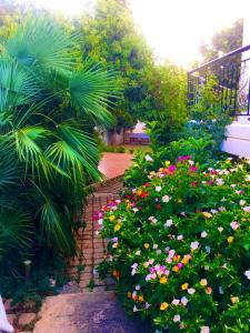 A garden outside Madison hall,near the Athens airport