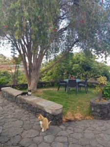 A garden outside Corral de Payo Grande