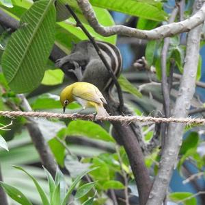 Animals at the homestay or nearby