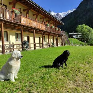 Ospiti di Chalet du Lys Hotel & SPA con animali domestici
