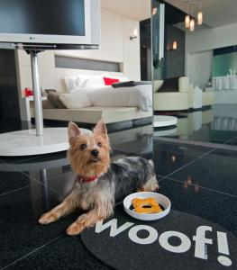 Pet or pets staying with guests at W Mexico City