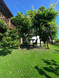 A garden outside Casa do Pomar