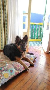 Pet or pets staying with guests at Hotel Adsera