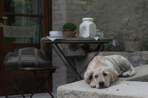 Pet or pets staying with guests at Premignaga Natural Home