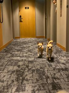 Pet or pets staying with guests at ICI HOTEL Asakusabashi