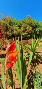 Een tuin van Hakuna matata