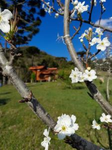 Um jardim em chalés Sítio Anjo Gabriel