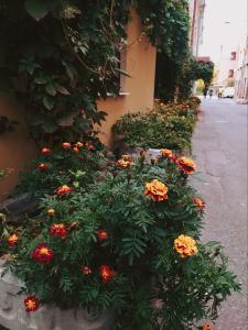 A garden outside Trezzini Art Hotel