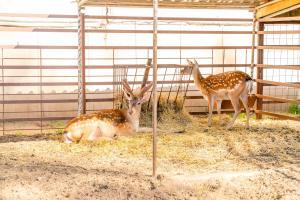 Животные в отеле или окрестностях