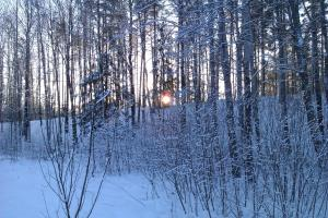 Дом Викинга (Ягодное) зимой