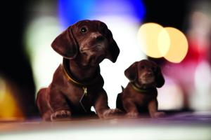 Pet or pets staying with guests at pentahotel Inverness