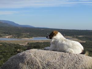 Pet or pets staying with guests at Cabañas de Montaña San Miguel