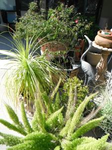 A garden outside Colusa Riverside Inn