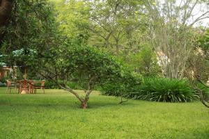 A garden outside House of Waine